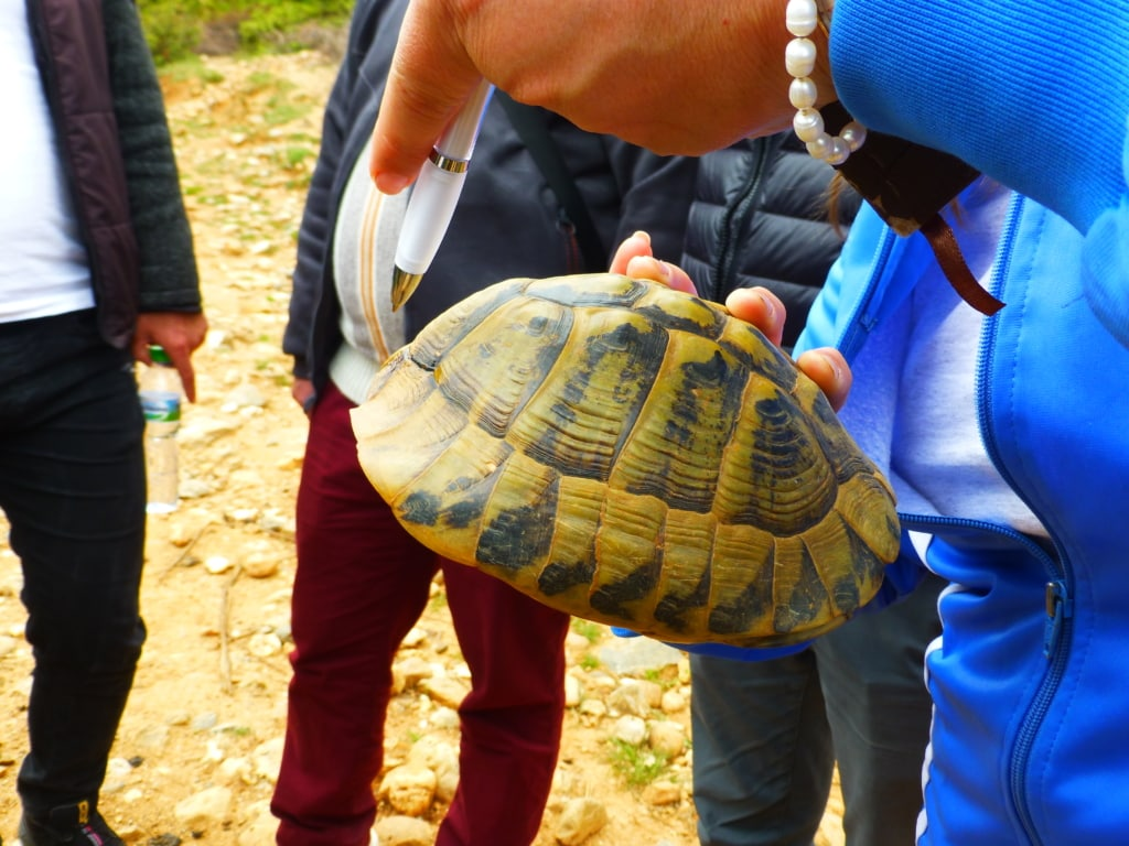 On the turtle trail -Protected area guides for Albania/Nature Experience Albania