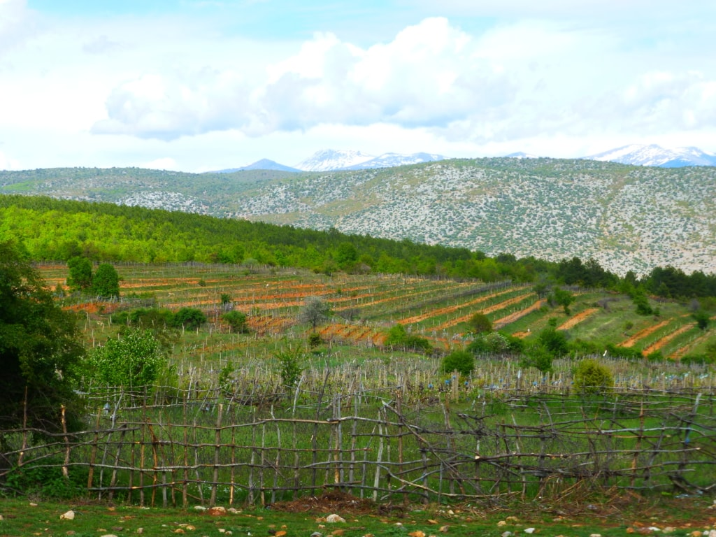 vineyards near Prespa lake - Protected area guides for Albania/Nature Experience Albania