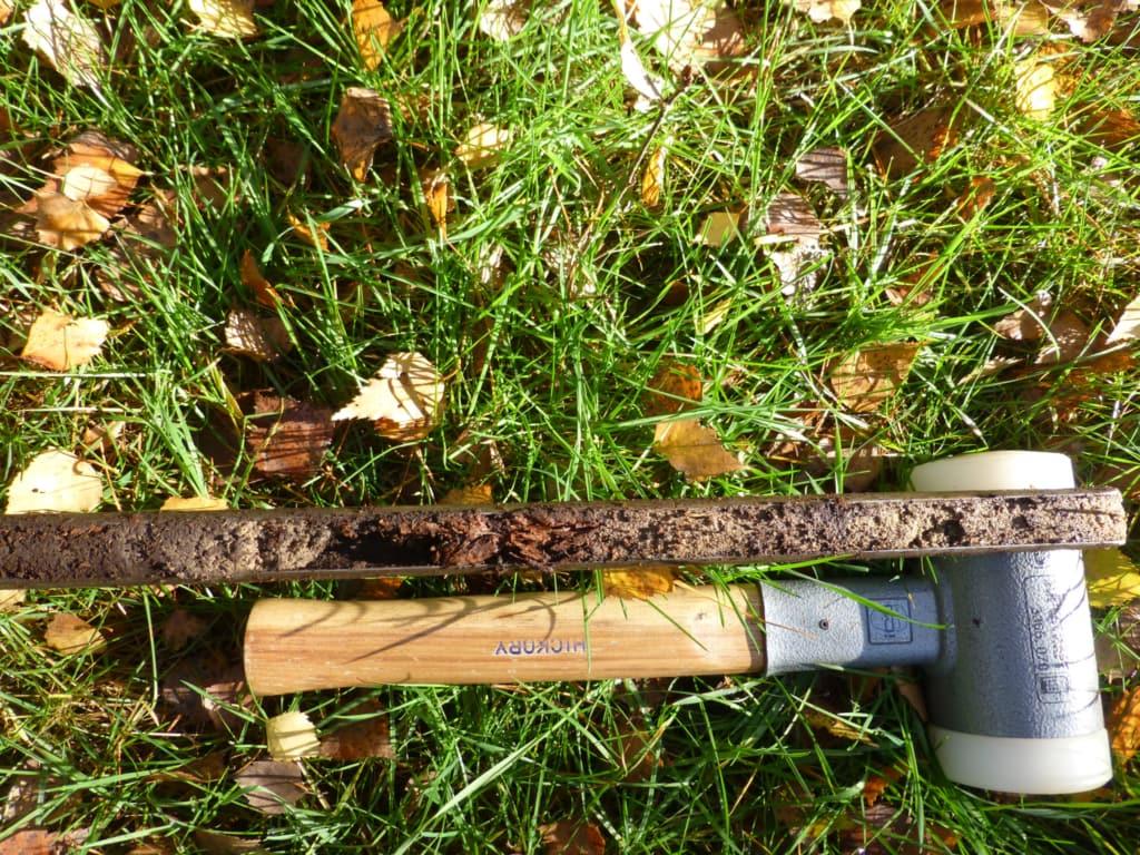 soil sample in autumn leaves