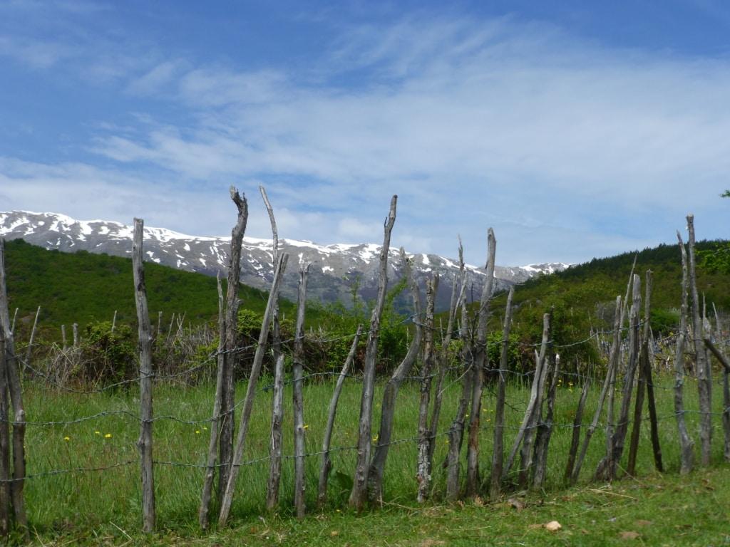 Wiese bei Gorica e Vogel - Schutzgebietsguides für Albanien/Naturerlebnis Albanien